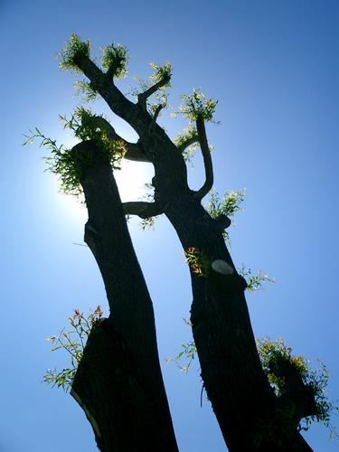 Dancing trees?