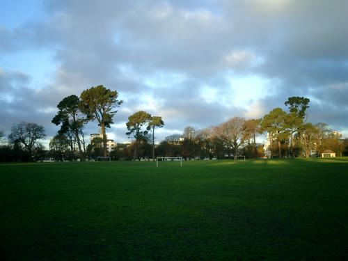Picture of trees, grass, and sky: Hagley Park in the evening