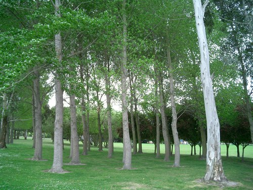 Picture of some trees in Christchurch.